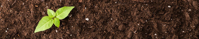 Mélange terre, sable, compost