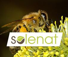 Actu-home-SOLENAT-228x192